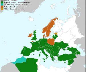 מימין - מפת התפוצה של זלזלת היערות. מתוך: Euro+Med PlantBase