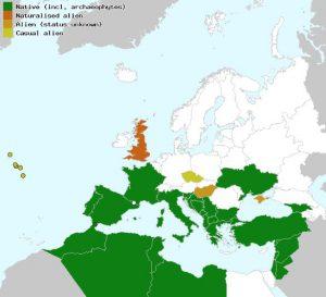 מפת התפוצה של זלזלת מנוצה. מתוך: Euro+Med PlantBase