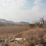 בית גידול של אחילוף הגליל, נאות גולן, 15.11.2018, צילמה חווה להב ©
