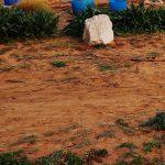 אדמת חמרא בגן המקלט השרוני, צילם עמיר פז ©