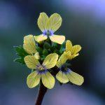 מחרוזת קשתית, צילם גדי פולק ©