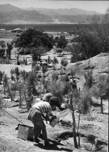 השקיית גן אילת, 1963. מקור: הארכיון הציוני המרכזי, ירושלים