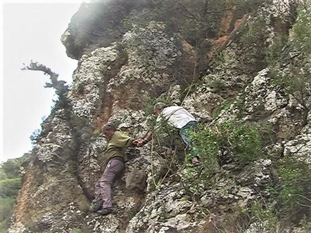 שוקה רווק בודק את עץ הברוש החי בשנת 2008. צילם חבר של שוקה ©