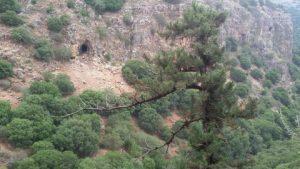 עץ הברוש וברקע המצוק הענק אשר במדרון הצפוני של נחל בצת. צילם חבר של שוקה ©