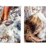 גזע הברוש המת והגדוע כפי שצולם בשנת 2008. בתמונה משמאל הסנדלים המפורסמות של שוקה. צילם חבר של שוקה ©