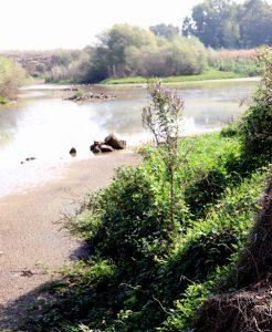 לוביה מצרית בשולי מאגר מים טבעי בפולג. תמונה ערגה אלוני ©