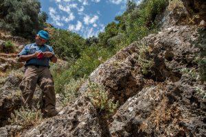 אשבל נמרוד יחד עם פעמונית החומות גדלים בכיסי סלע טרשיים, על גיר מתקופת היורה בנחל גלשון. צילם חנן יחיאלי ©