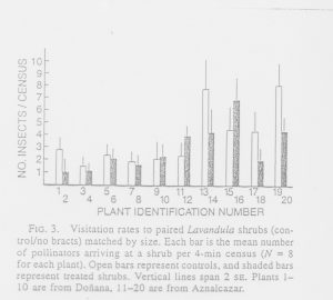 התוצאות שקיבלו דבסה והררה (1985) כאשר בדקו את העדפת המאביקים לתפרחות בעלות דגל לעומת תפרחות חסרות דגל