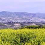 סיכום השתלמות כלנית לעמק בית-שאן, 5.3.2020
