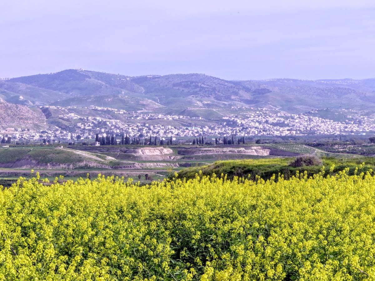חרדל לבן ונוף הע'ור ורמת-אירביד 5.3.20 מתצפית שייח-חוסיין א.אשכר ©