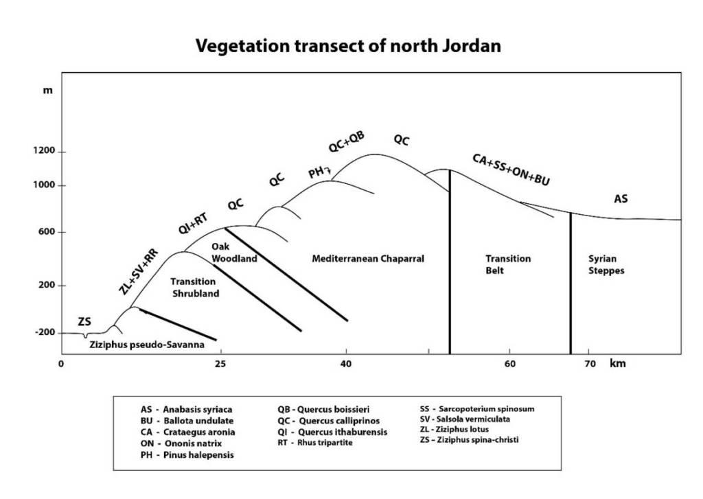 חתך צומח סכמתי מעמק הירדן לגלעד ודרום הבשן. שמידע ©
