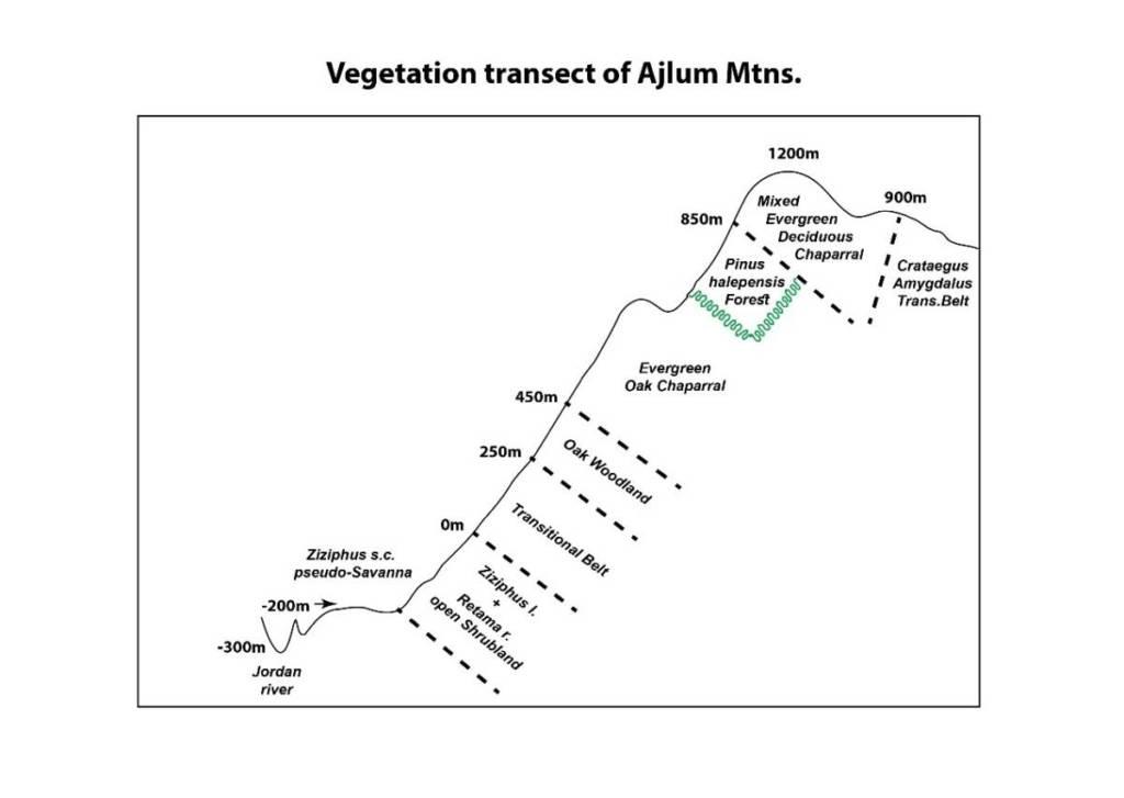 חתך צומח סכמתי מעמק הירדן להר הגלעד (הרי עג'לון) באזור מעלה וואהדנה. שמידע ©