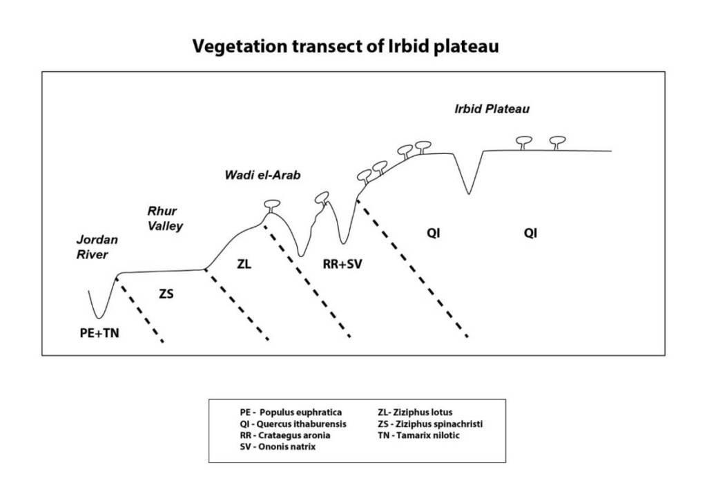 חתך צומח סכמתי מעמק הירדן לרמת אירביד. שמידע ©