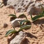 לשון-אפעה רבת-עלים, צלם בועז לנגפורד ©