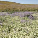 הר-הנגב פורח – כל המדבר חגיגת פריחה