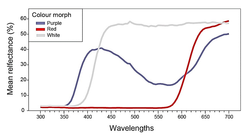 החזר האור היחסי (%) מפרחים אדומים לבנים וכחולים מאתר מגידו.