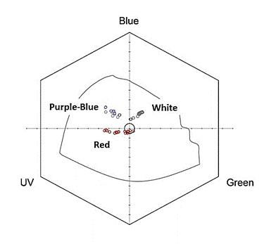 המיקום של פרחים אדומים, לבנים וכחולים של כלנית מצויה במשושה ראית הצבעים של דבורי דבש (Chittka 1992). מרכז המשושה מציין את הרקע של עלים ירוקים.