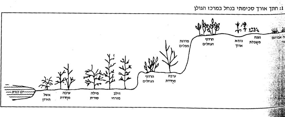 חתך צומח בנחל בר-קיימא ובמסיל במרכז הגולן. מתוך היימן 1993 ©