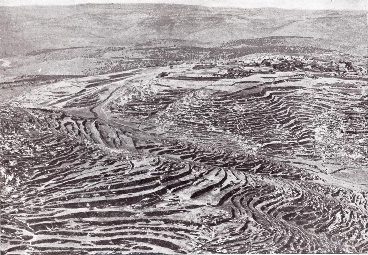Read more about the article האם השינויים בצומח ארץ-ישראל הם תוצאה של פעילות האדם או של שינויי אקלים?
