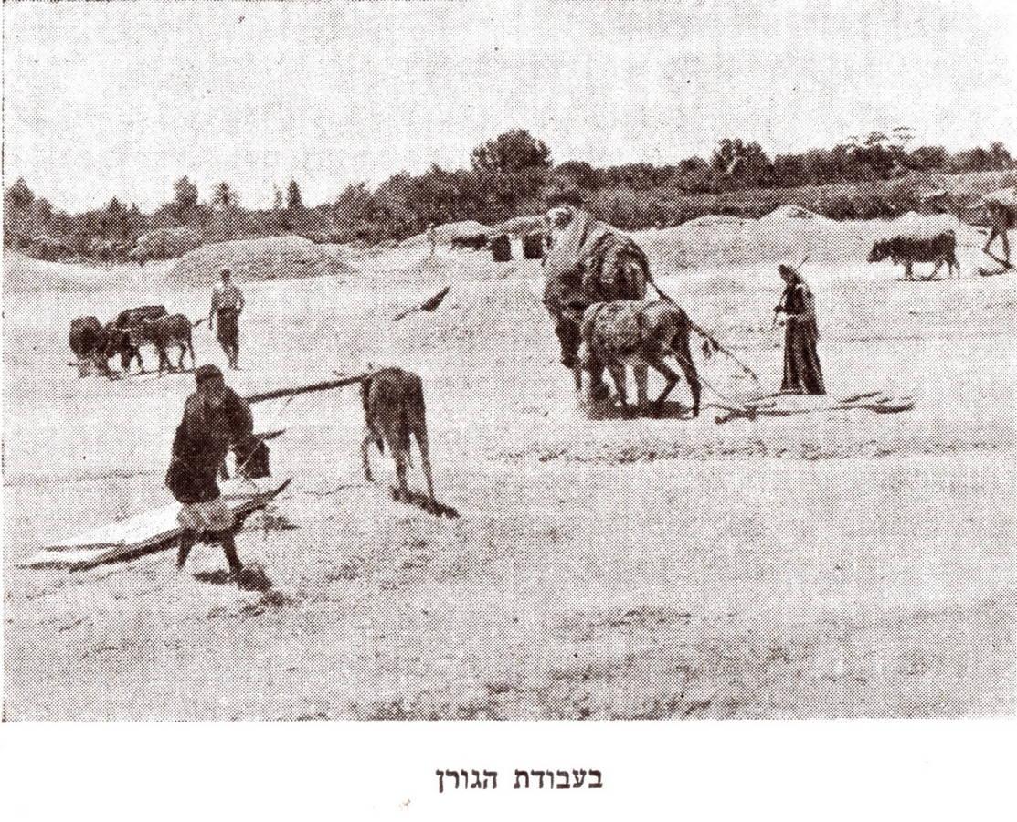 """עבןדןץ גןרן, רייפנברג 1950 """"מלחמת המזרע והישימון""""."""
