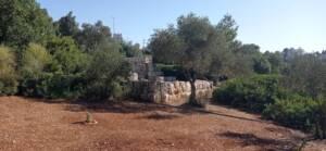 סתוונית ירושלים