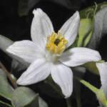 לבנה רפואי 21-5-2012 הר מירון עוז גולן