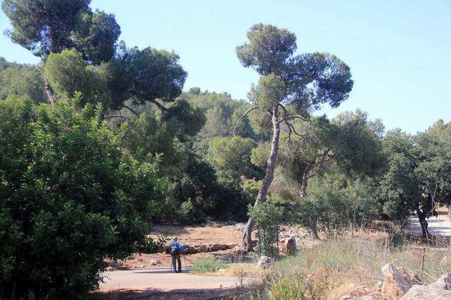 יער מעורב אורן ואלון, צילום מהמרשתת