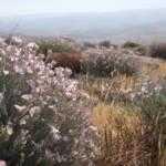 חבלבל זיתני,26.4.21, עמשא-קריות, צילם ב.לנגפורד ©