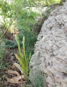 רצועית הגליל, 10.5.21 חרמון, צילם: נ. צברי ©